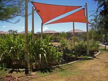Phx Community Garden